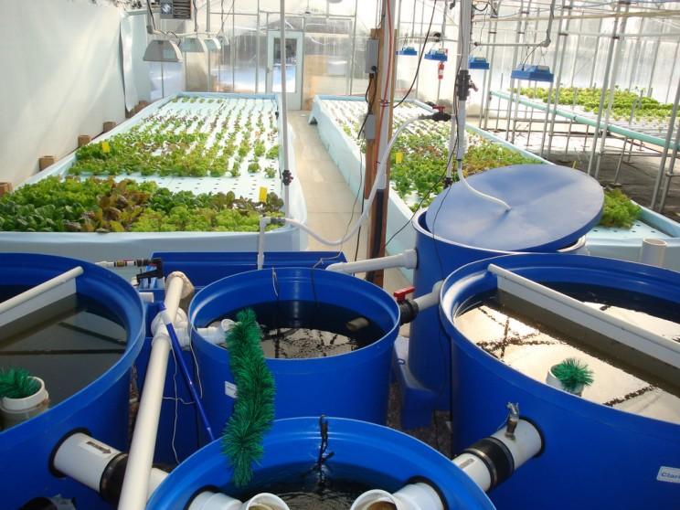 3. Aquaponics - Nuôi trồng thủy canh, hệ sinh thái trồng cây, nuôi cá -