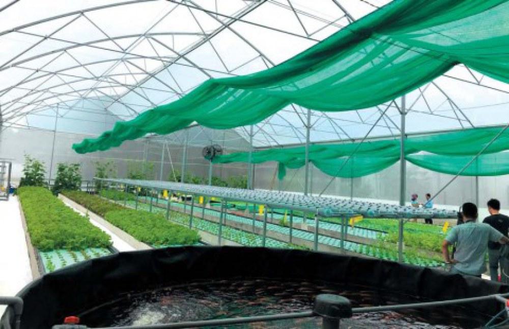 Hình ảnh internet mô hình trồng rau Aquaponics