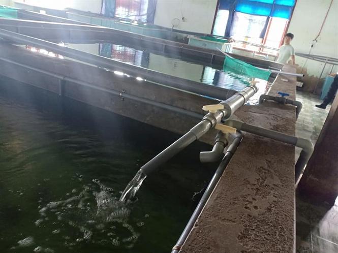 Hệ thống bể nuôi được thiết kế tuần hoàn nước chảy khép kín. Nước trong bể nuôi được thu gom xử lý bằng hệ thống lọc làm trong và làm sạch nước. Sau đó nước này sẽ được bơm trở lại bể nuôi liên tục, nên ít lấy thêm nguồn nước tự nhiên