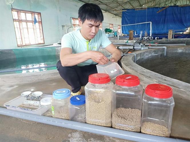 Thức ăn cho tôm là thức ăn công nghiệp, được nhóm nghiên cứu sản xuất tại chỗ, thay cho thức ăn tươi