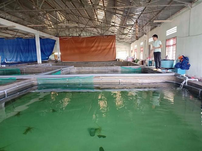 Lợi thế nuôi tôm trong bể dễ chăm sóc và kiểm tra tôm, không cần phải lặn xuống biển như nuôi truyền thống