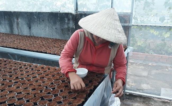 Mỗi rọ trồng chứa xơ dừa nên được gieo 2 -3 hạt để đảm bảo cây phát triển tốt nhất