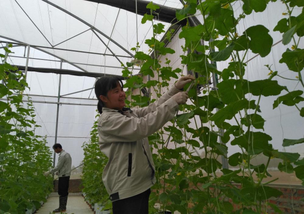 Giải pháp này hiện đã được nhiều nông trại, nhà vườn ứng dụng đạt hiệu quả cao.
