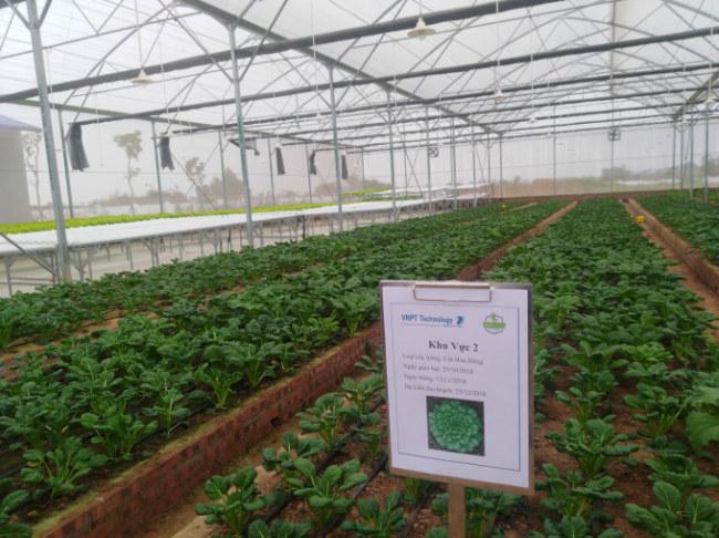 Trong nhà màng này, nhiều loại rau quả đang được trồng theo từng khu  vực, chứng minh ưu thế vượt trội khi ứng dụng công nghệ cao vào sản xuất  nông nghiệp.