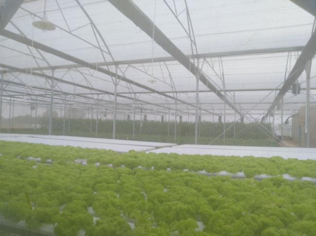 Toàn bộ khu vực nhà màng ứng dụng giải pháp Nông nghiệp thông minh của  VNPT Technology. Dù thời tiết mưa lạnh, môi trường trồng trọt trong nhà  màng vẫn được đảm bảo ổn định.