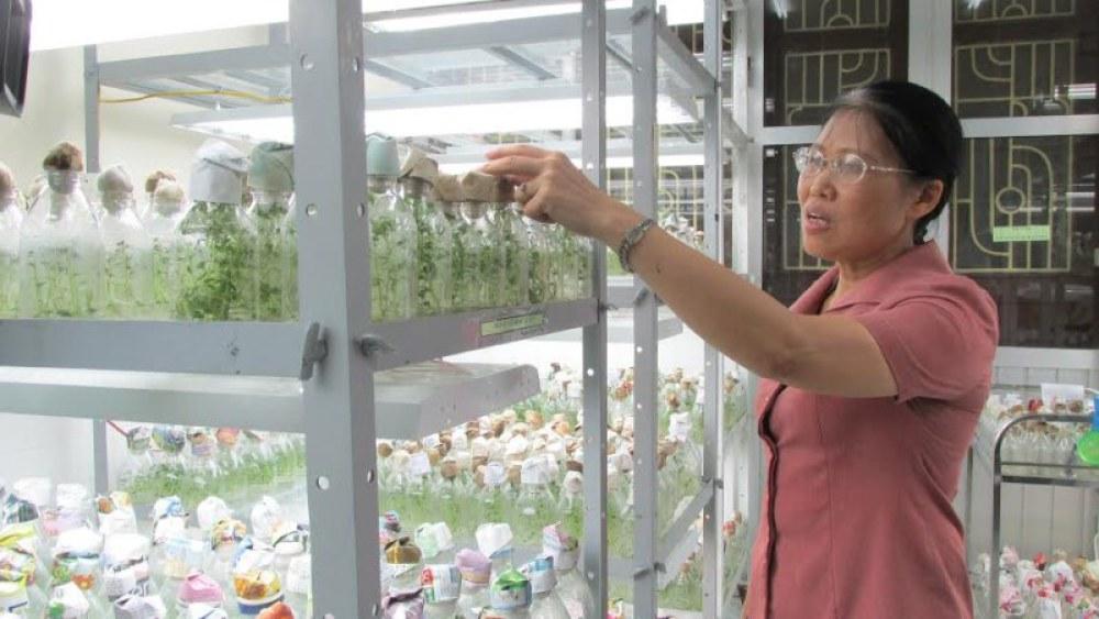 Viện trưởng Viện Sinh học nông nghiệp Nguyễn Thị Lý Anh giới thiệu về  hiệu quả chiếu sáng của sản phẩm Rạng Đông trong tăng cường khả năng  nhân giống cây trồng. Ảnh: Rạng Đông