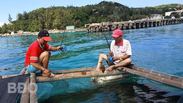 Khách du lịch tham quan và câu mực tại bè nuôi mực ở xã Nhơn Châu.