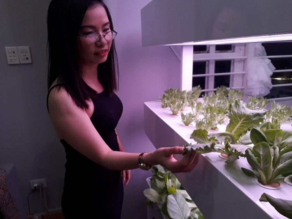 Hệ thống trồng rau khí canh có thể trồng tất cả các loại rau, quả, cây dược liệu. Ảnh: Hà Thế An.