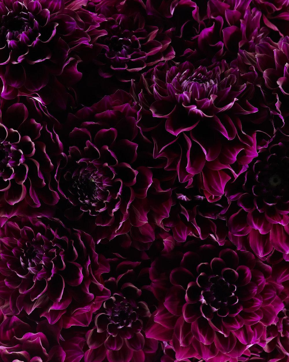 black daliha v1 may 14_w1.jpg