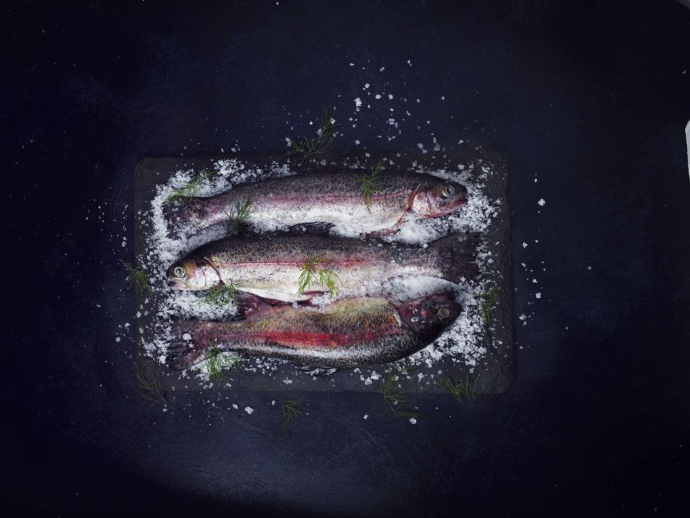 389_rainbow trout.jpg