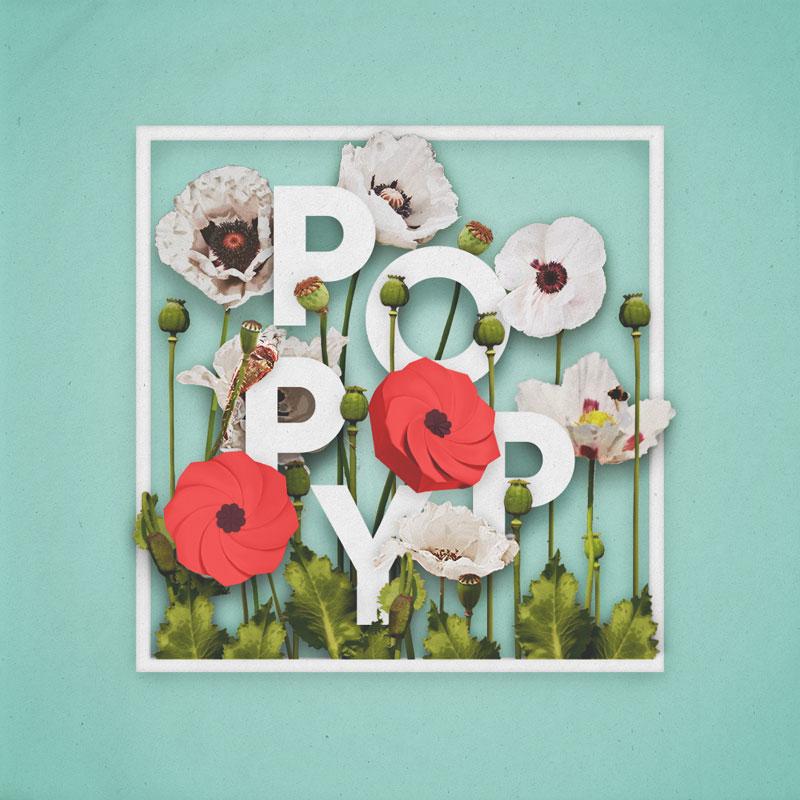 poppy-sml.jpg