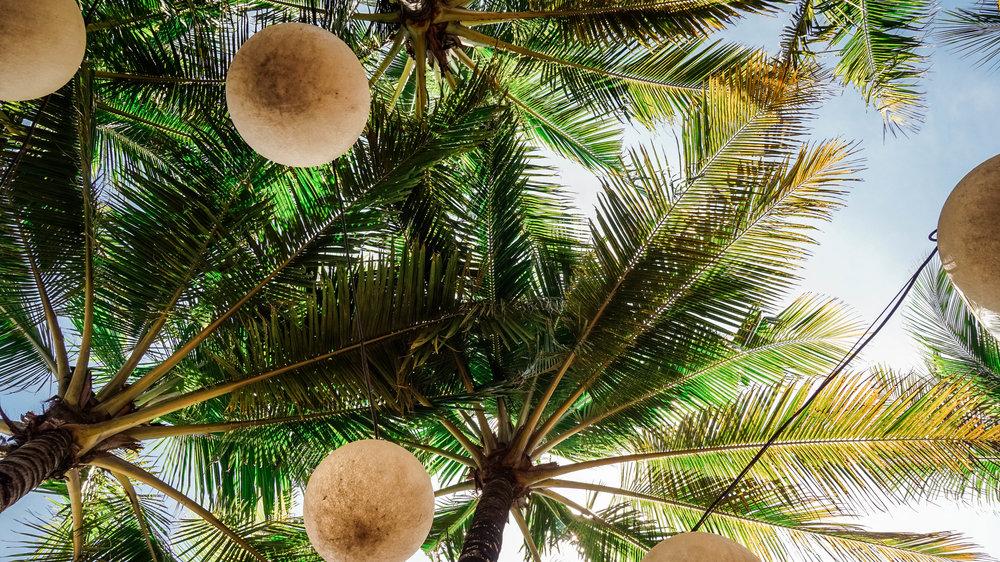 w-bali-seminyak-pool-palms.jpg