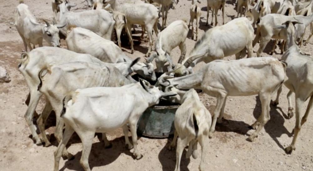 Les villageois et les animaux utiliseront cette eau durant 4-5 jours (3000 litres par réservoir)