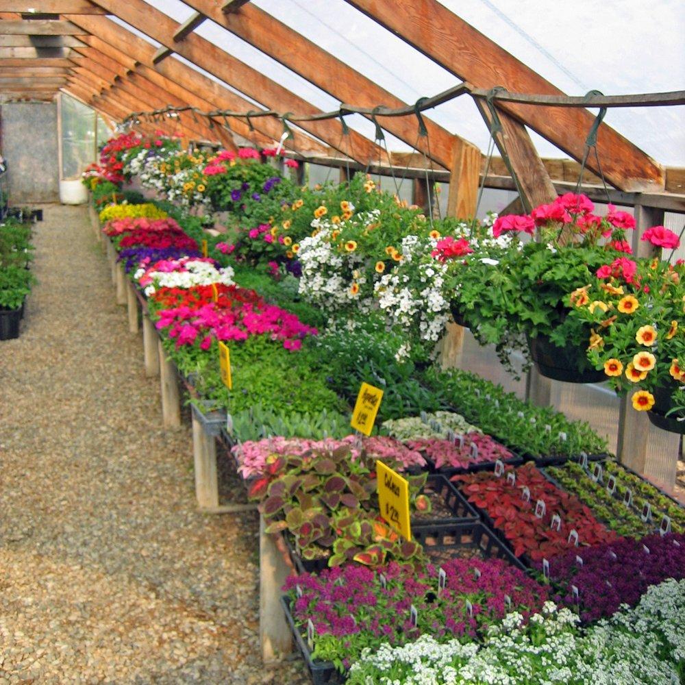 Greenhouse -