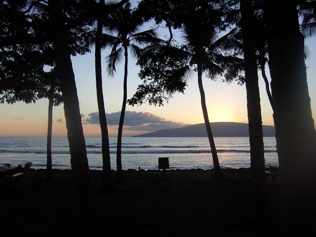 fall-in-maui-photo-_3.jpg