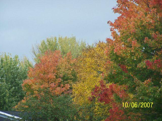 fall002-640×480.JPG