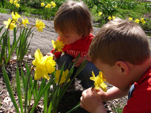 boys-smelling-flowers-2-spring-2008.jpg