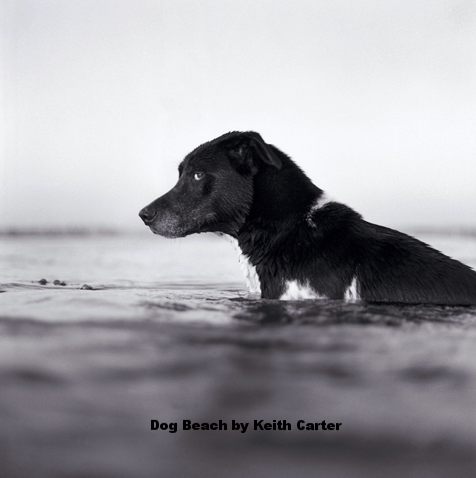 Best Friends... - Best Friends: The Dog as Subject in Fine Art Photography comes from the personal collection of photographers Bill and Alice Wright's dog-centric pictures (including some of Bill's own work).  As Bill puts it:
