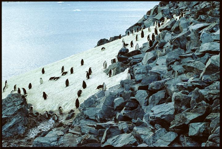 bw_20140531_Penguins, Antarctica7.jpg