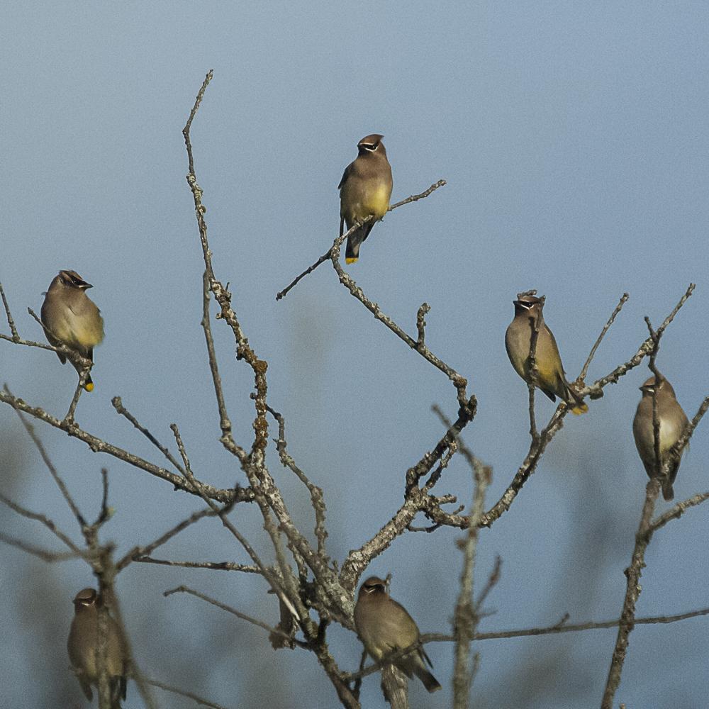 bw_20070206_Ceder Gap Bird Preserve_014.jpg