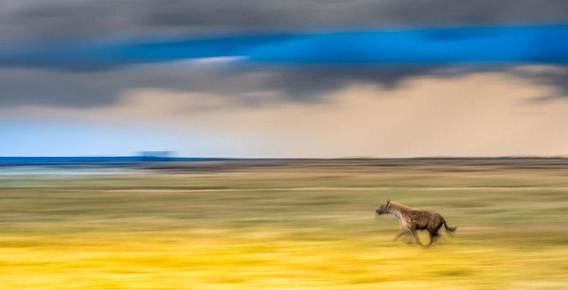 African Footprint Safaris