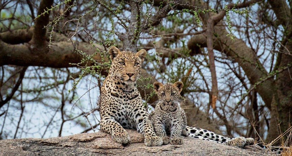 African Footprint Safaris with Isbjorn Viot