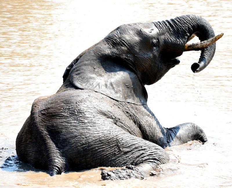 African Footprint Safaris - Ele.JPG