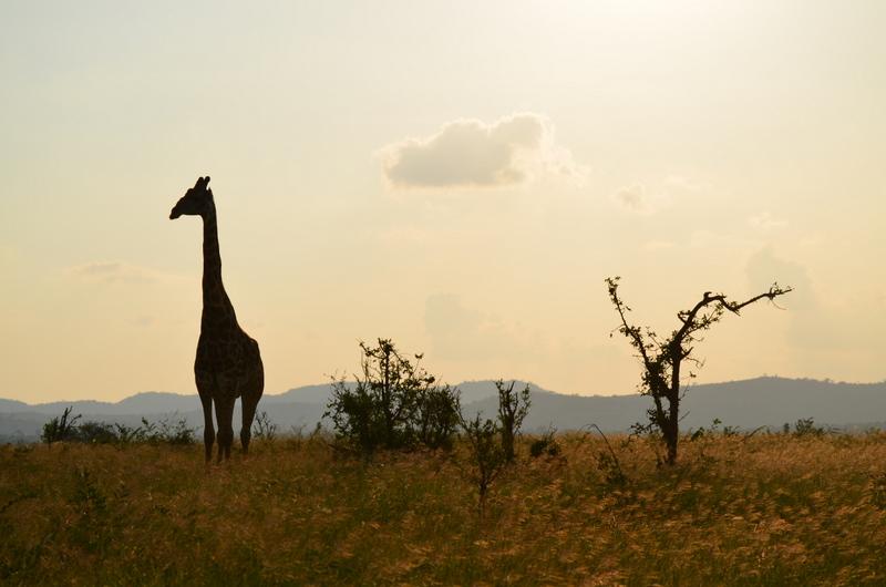 African Footprint Safaris - Sunset.JPG