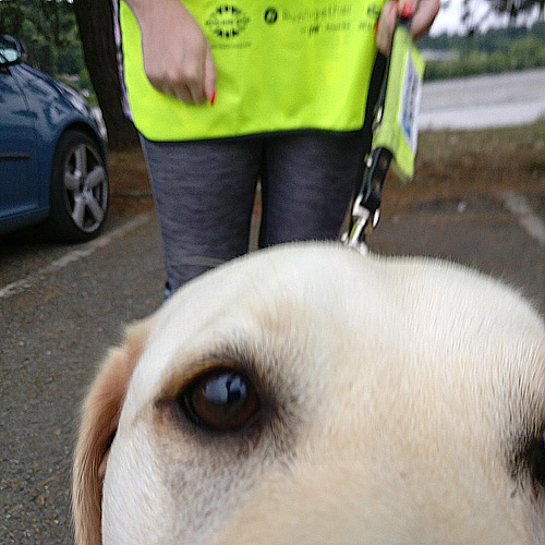 Lizzie the Guide Dog was very friendly!