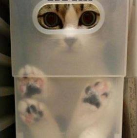 cat in box.jpg