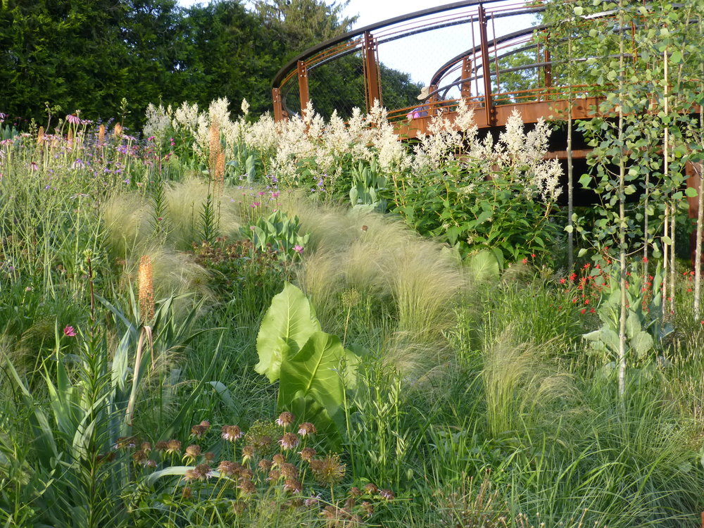 The lawn hillside has been replaced with warm-season grasses and multi-stem flowering trees.