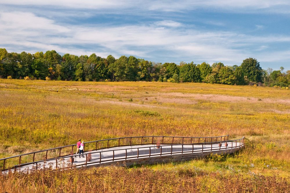 Bridges bring focus to the details of different habitats. The Meadow Bridge floats amongst the Joe Pye Weed and Blazing Star of the wet meadow and serves as a space for gathering and teaching.  Guests watch wildlife in the lake from the Hourglass Bridge.  The Earth Bridge carries the meadow over a small restored stream.  Downstream, a boardwalk crosses the stream amongst a mature Beech Oak woods.