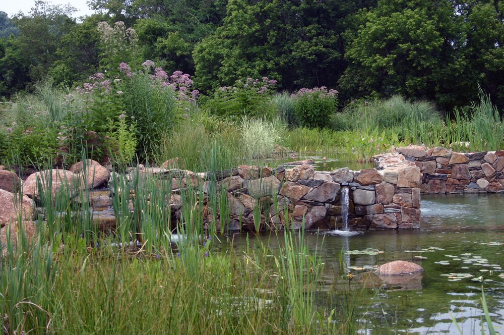Plantings of grasses and perennials both in and out of the pool echo the natural landscape while the use of simple indigenous dry-laid stone walls between the pools evoke the local character of Chester County.