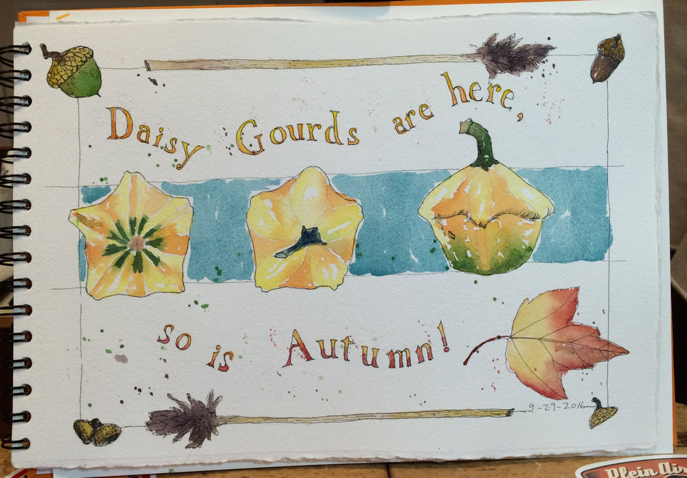 Daisy Gourds 9-2016.jpg