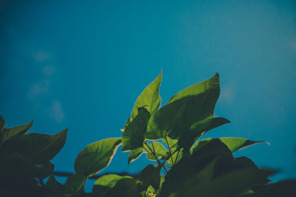 leaves at night-1.jpg