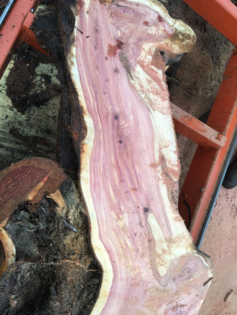 Live edge juniper slabs
