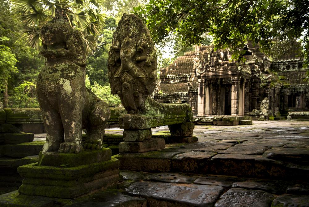 INT_AngkorSnake_Cambodia_Sept2016_RJN-0826.jpg