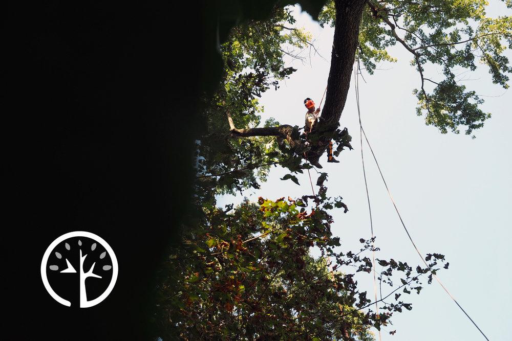 Eddie Tree Service Tree Removal