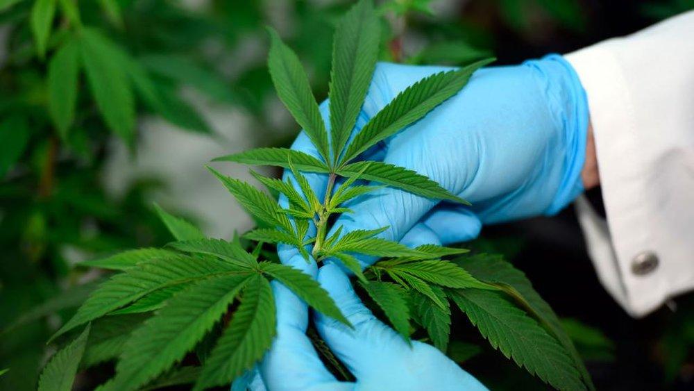 mitos-realidades-marihuana-n.jpg