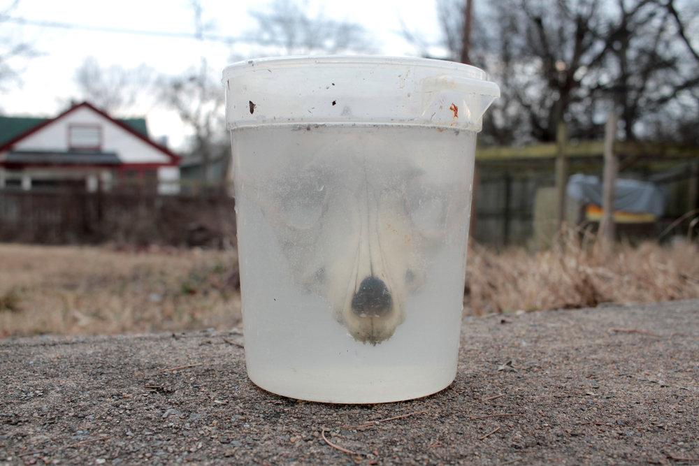 skull-clean.jpg