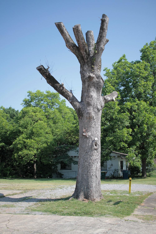 trimmed-tree.jpg
