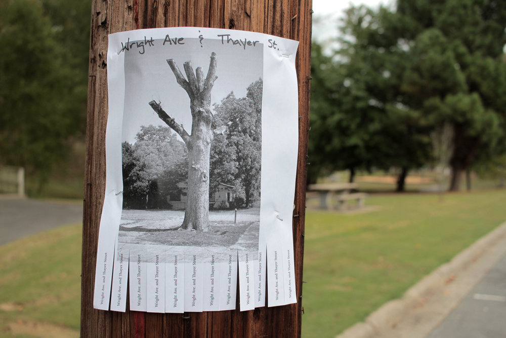 TreeAllsopp.jpg