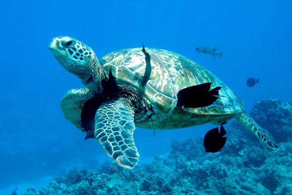 Swim & Snorkel Charters -