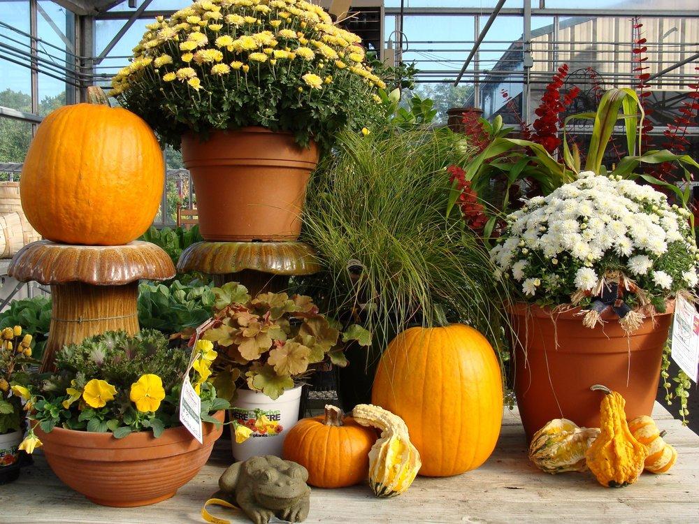 fallghdisplantspumpkins14s.jpg