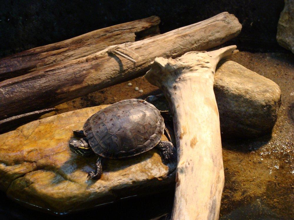 turtleonrockgc.jpg