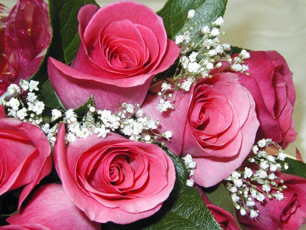 rosespinkclose08es.jpg