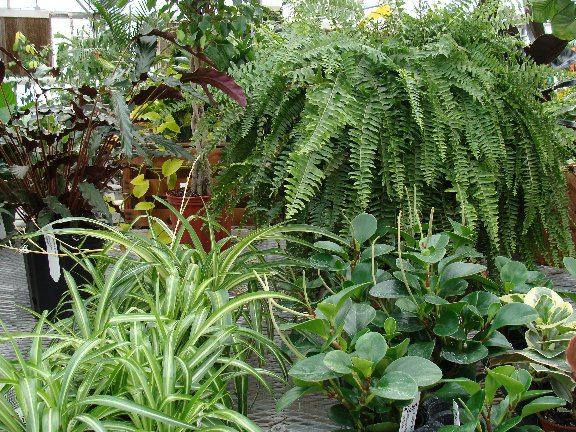 Houseplants_Dis_10-17sw.jpg