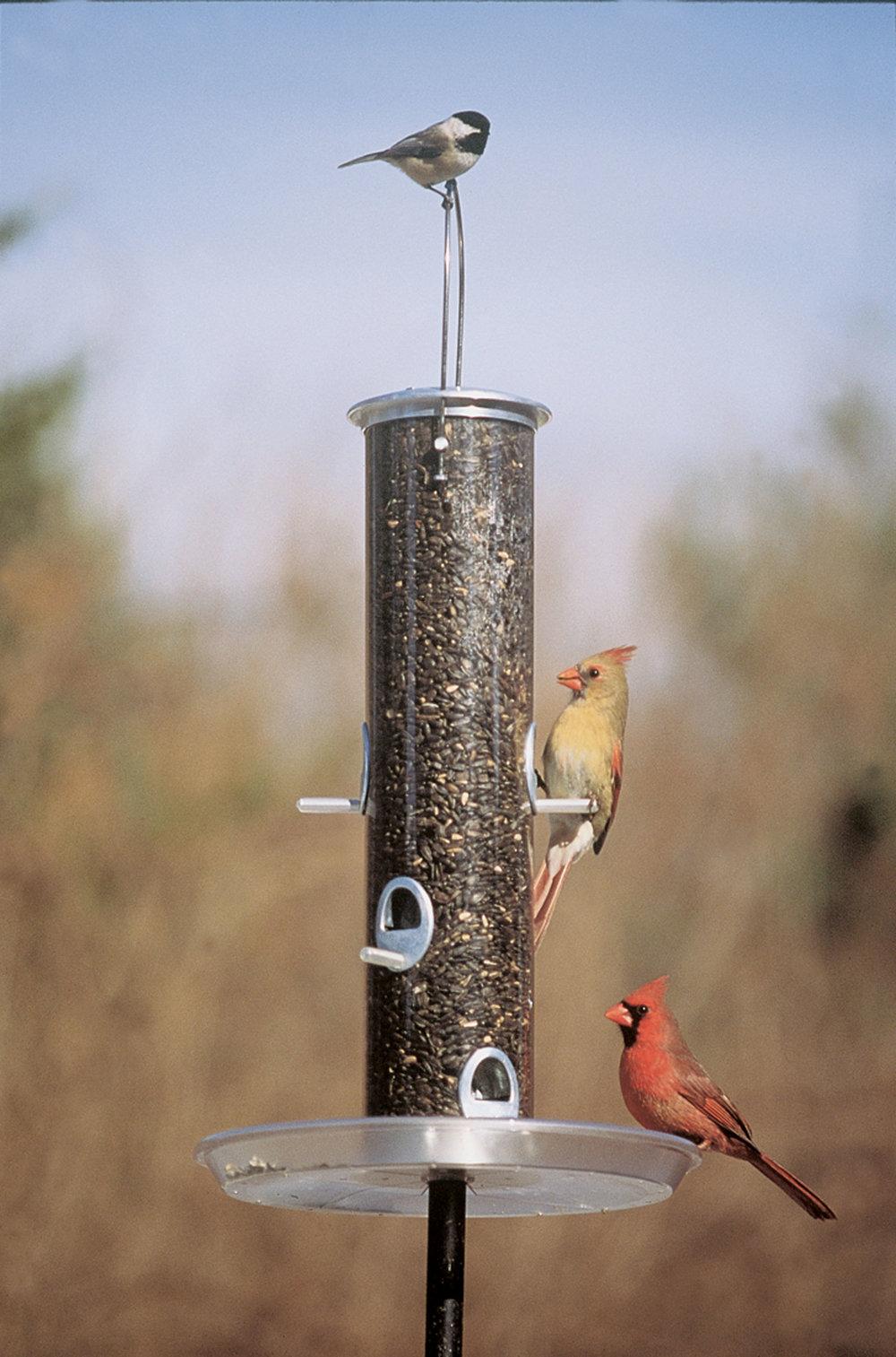BirdsOnTubeFeederWeb.jpg