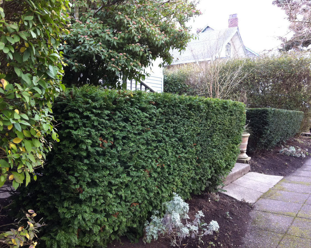 How-to-Hedge-Planting-and-Pruning-Guide (1).jpg