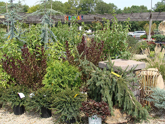 Trees and Shrubs at Hillermanns